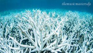 นักชีววิทยา ทางทะเลต้องการช่วยแนวปะการังที่กำลังจะตาย